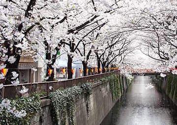 crucero por Sakaiminato (Japón)