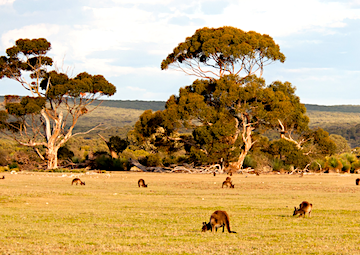 crucero por Kangaroo Island (Australia)